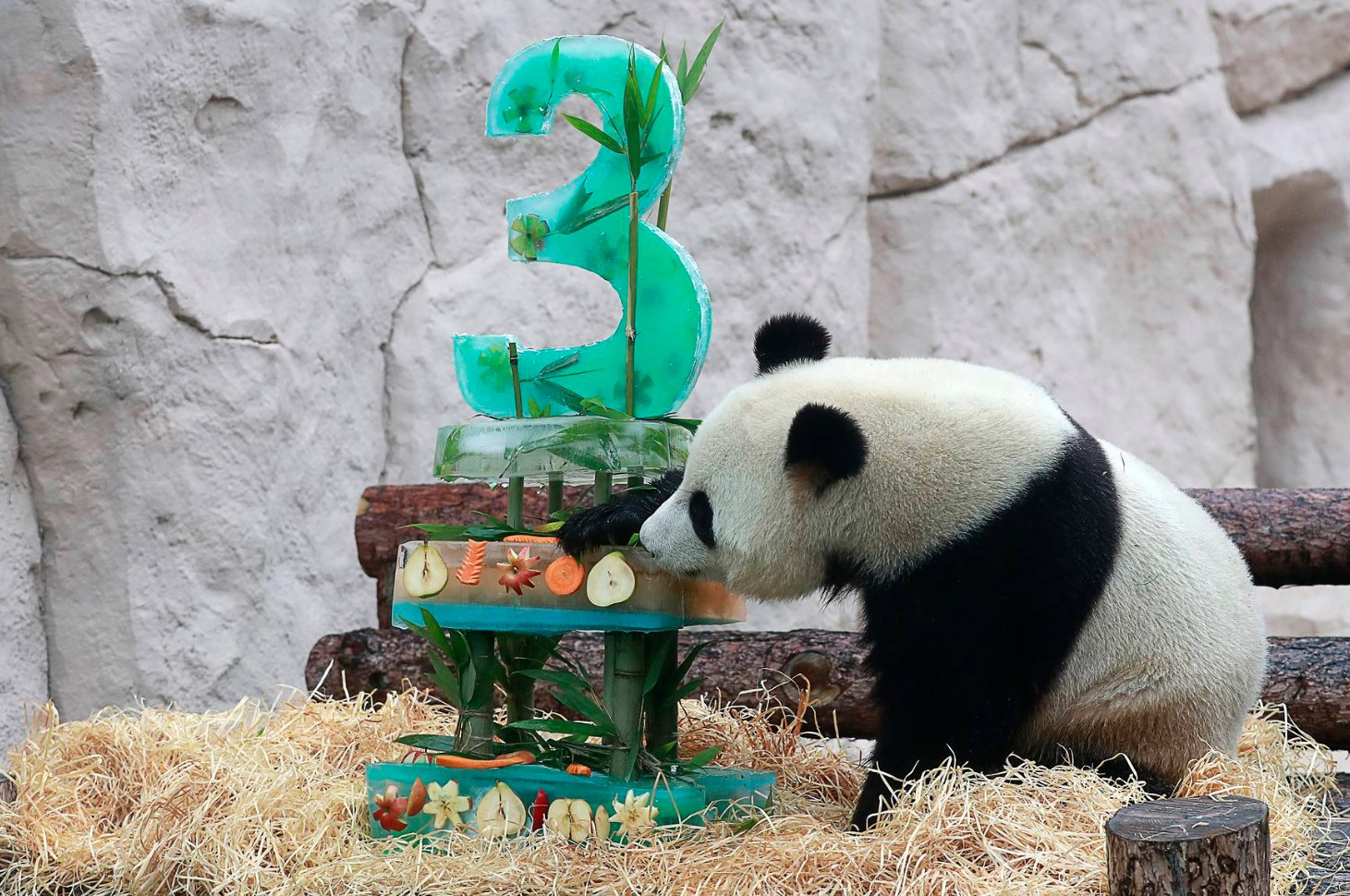 "An ""Ice Cake"" Cooked for Pandas' Birthday in Moscow"